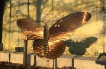 Gulf Fritillary installed in SC Aquarium Butterfly Garden!